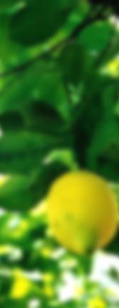 A la sombra de un limonero, si no pienso en ti me muero